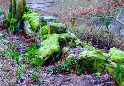 shibden valley moss