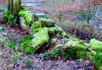 shibden valley moss